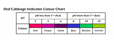red-cabbage-indicator